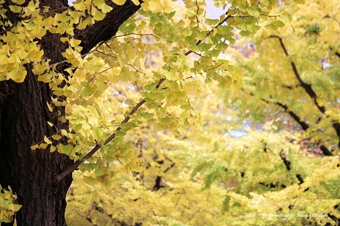 チビプードルモコの毎日☆日比谷公園C
