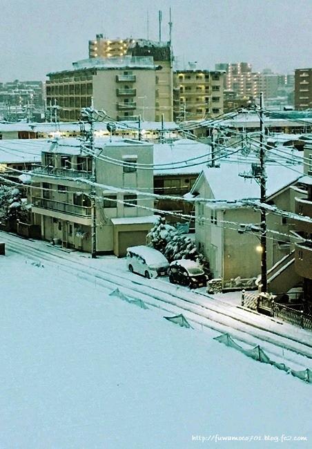 チビプードルモコの毎日☆雪C