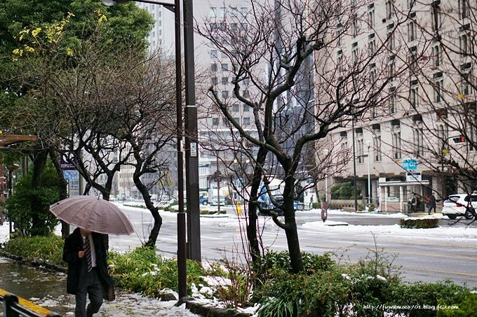 チビプードルモコの毎日☆雪