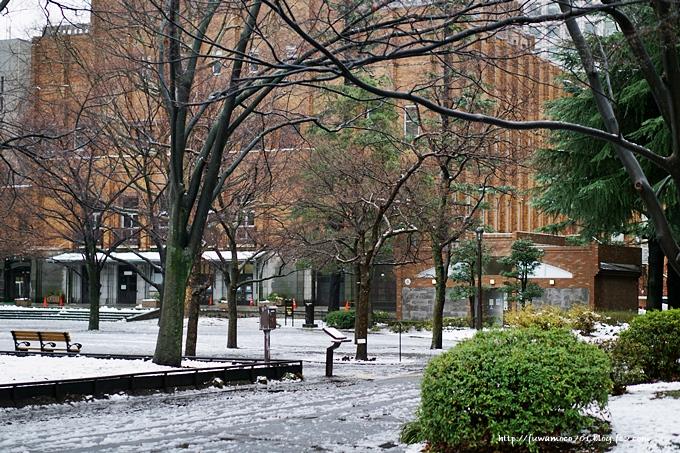 チビプードルモコの毎日☆雪A