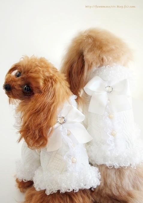 チビプードルモコの毎日☆モコみるく白コート
