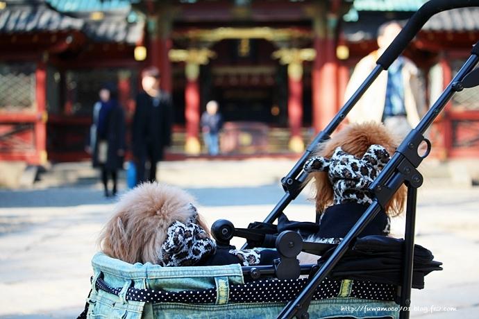 チビプードルモコの毎日☆モコみるく 根津神社にてA