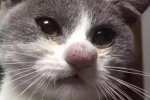 Cat_hachi
