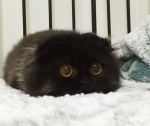 big-eyed-cat-1.jpg