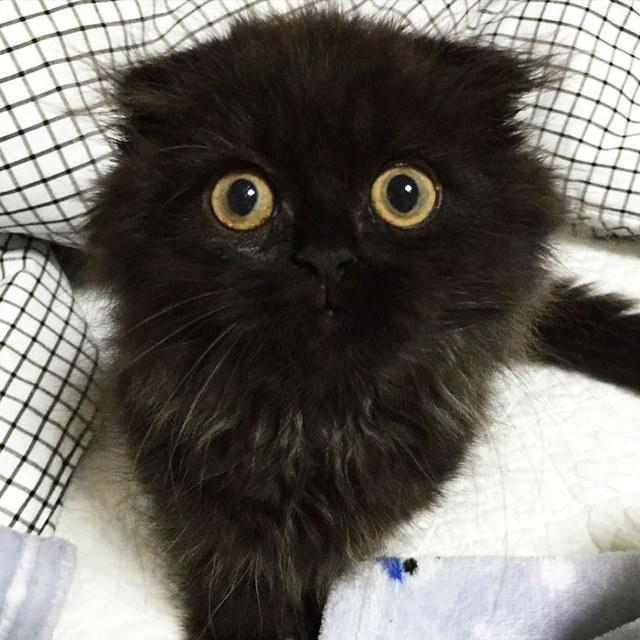 big-eyed-cat-2.jpg