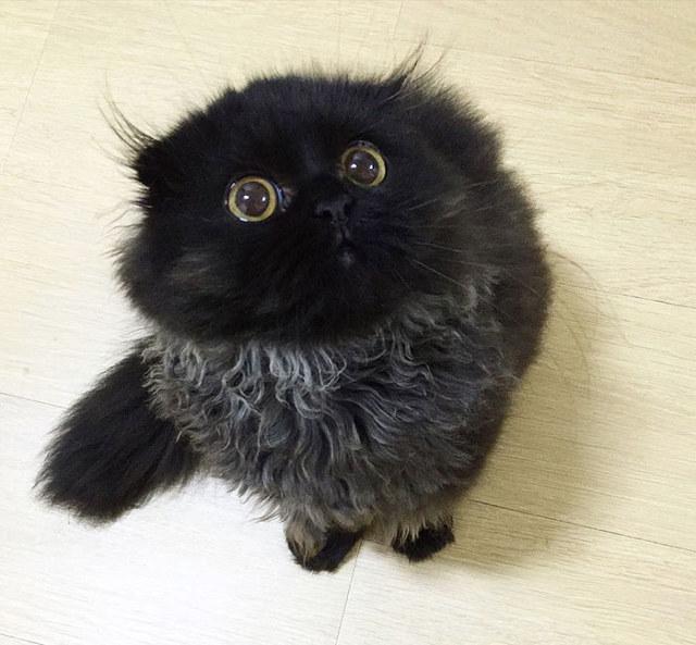 big-eyed-cat-3.jpg