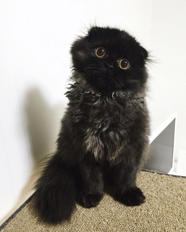 big-eyed-cat-4.jpg