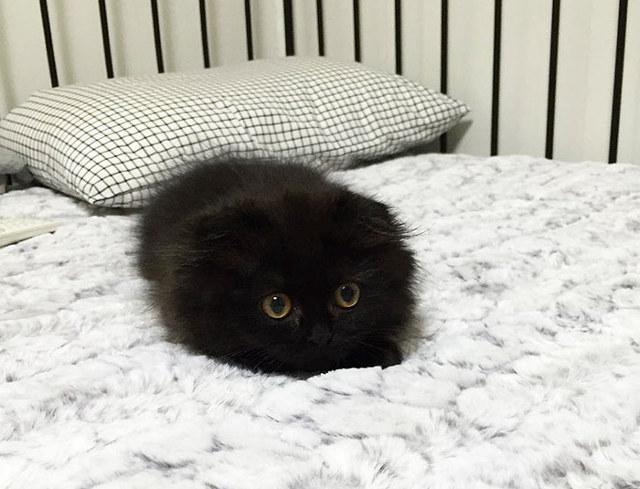big-eyed-cat-5.jpg