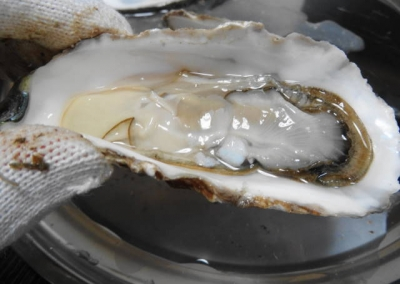 生牡蠣UP