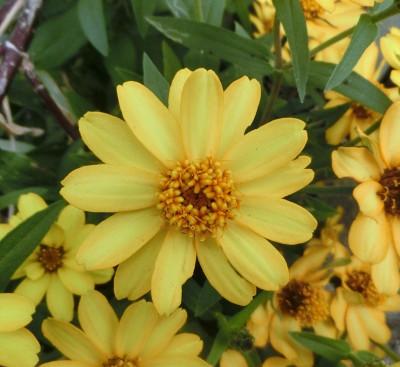 160218-黄色い花-2