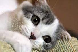 癒し猫その2