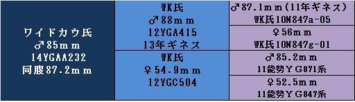 yg16wk85a.jpg