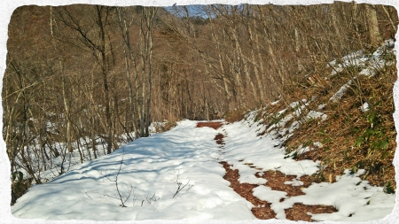 2016 渓流散歩 (1)