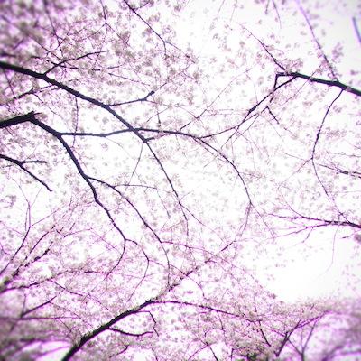 春の桜イメージ