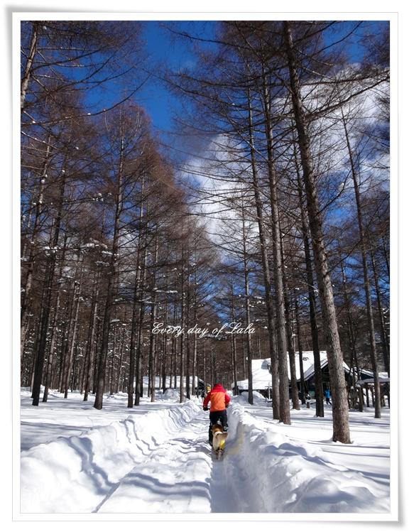DSC03529雪景色