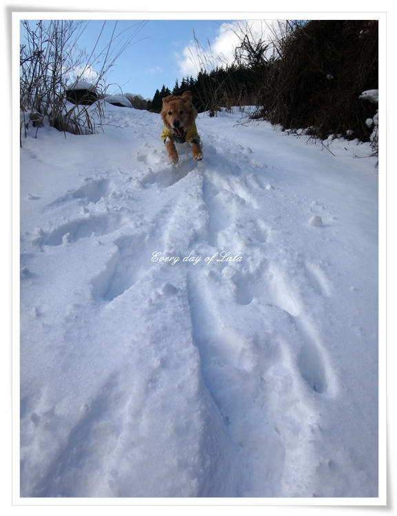 DSC03531雪上ダッシュ