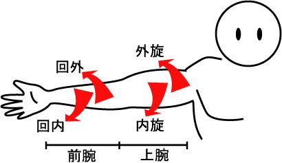 腕の外旋と回内