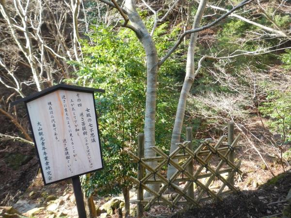 丹沢大山 018