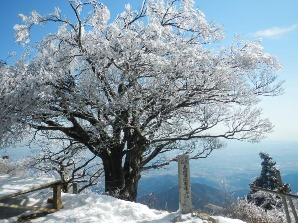 丹沢大山 059