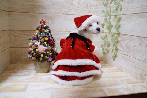 クリスマスれおん1