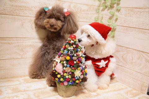 クリスマスれおん2