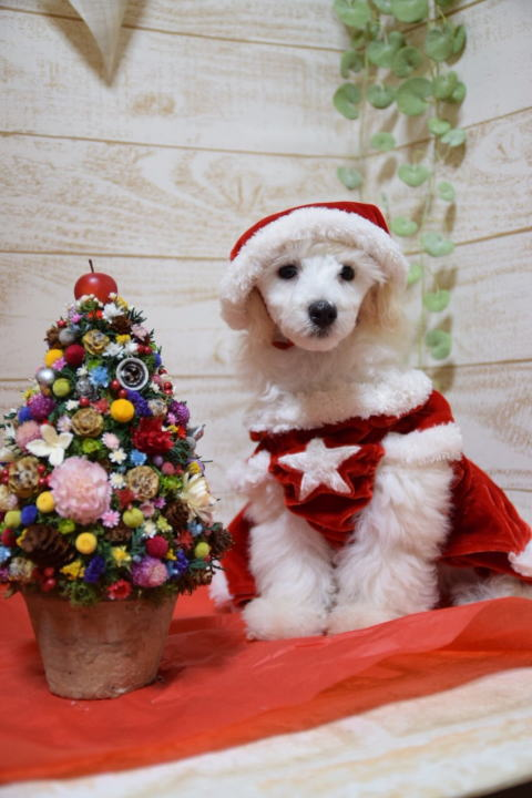 クリスマスれおん3