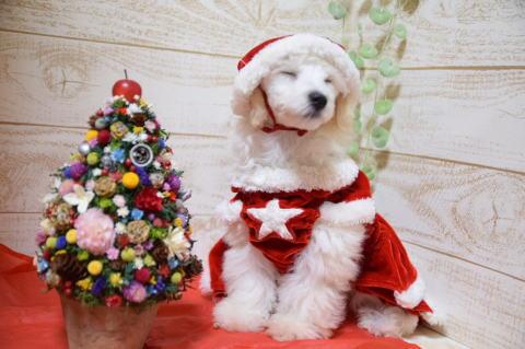 クリスマスれおん4