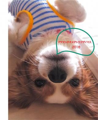 2016年賀状_convert_20160105143642