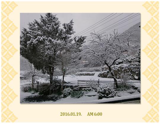 1月19日6;30からの雪
