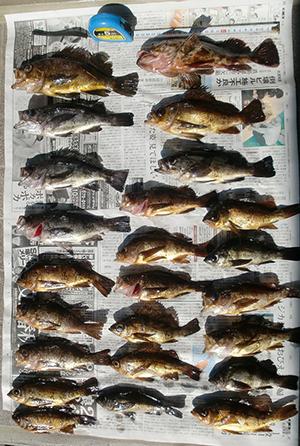 2月のメバル釣り
