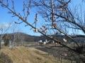 八郷の丘の春 (1)