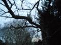 樹上の猫 (1)