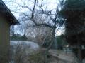 樹上の猫 (2)