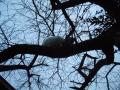 樹上の猫 (3)