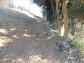 伐採 (1)