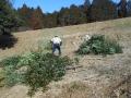 伐採 (4)