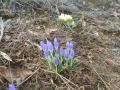 0229春 (1)