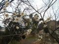 0229春 (3)