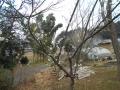 0229春 (4)