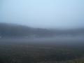 濃霧0308 (6)