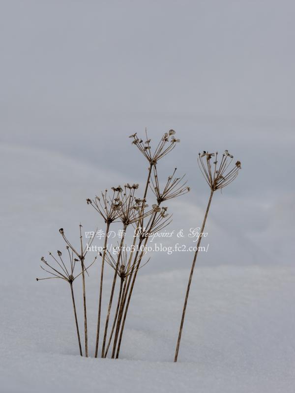 もう一つの雪景色 C