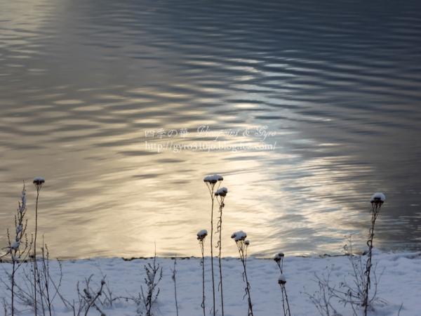山中湖 K