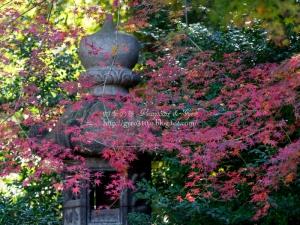 旧古河庭園 G