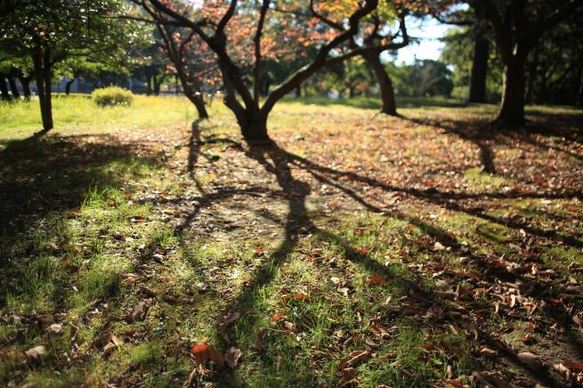 秋の朝+002_convert_20151123184023