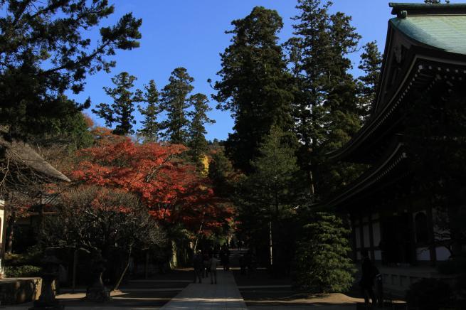 鎌倉7D+011_convert_20151212201629