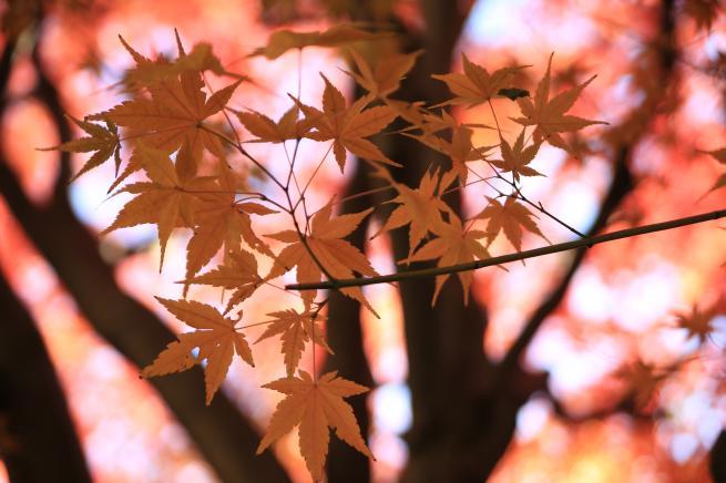 紅葉富岡+017_convert_20151216033801