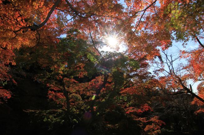 鎌倉7D+047_convert_20151217194126