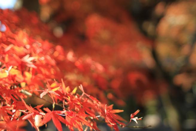 鎌倉7D+033_convert_20151217193826
