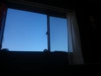 狐巣 巣窓から