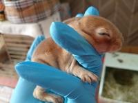 赤子 うさぎ 狐巣 子供